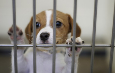 Animal Shelters Near You!