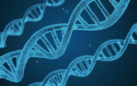How an Infant's DNA Segments Affect Birthweight and Later in Life Diseases