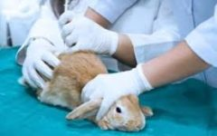 The Truth About Animal Testing