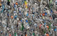 Plastic Water Bottles: Convenient Catastrophe?